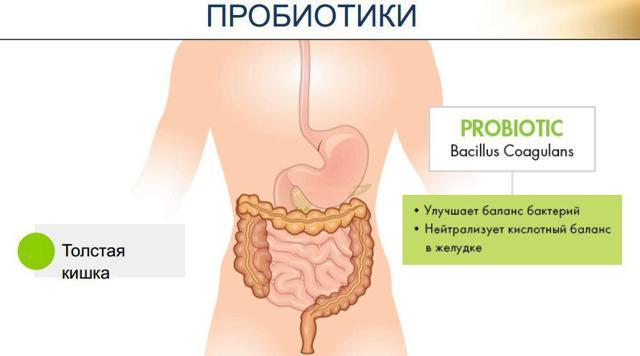Пробиотики и антибиотики: совместимость, как принимать одновременно и правильно?