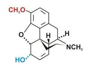 Кодеин и алкоголь — совместимость, взаимодействие веществ, последствия